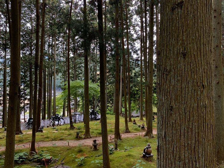 こけむしろの周りの木々の画像